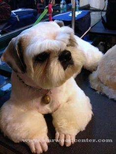 Pet Grooming for Professionals (paid link) Want to know more, click on the image. #DogGrooming #DIYDogGrooming Dog Grooming Styles, Dog Grooming Tips, Dog Grooming Supplies, Grooming Salon, Shihtzu Grooming, Pet Tips, Dog Supplies, Funny Dog Faces, Funny Dogs