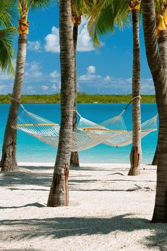 A hammock strung between two trees on the beach: the perfect place to enjoy a good read. Blue Haven Resort (Providenciales, Turks and Caicos Islands) - Jetsetter