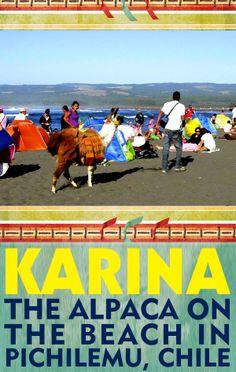Karina the Alpaca on the beach in Pichilemu, Chile