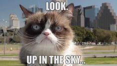 Grumpy Cat In The Sky!?!