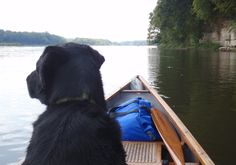 Great tips on camping with your dog!