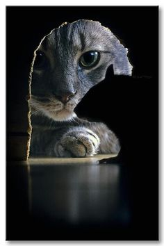 Cat from a mouse perspective