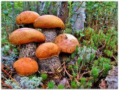как сеять грибы