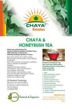Chaya Tea Chaya Plant, National Institute Of Nutrition, Wine Drinks, Cholesterol, Healing, Herbs, Organic, Tea, Drink Recipes