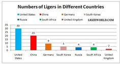 Ligers in Different Countries of the World