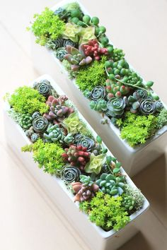 How To Use Succulent Landscape Design For Your Home Succulents In Containers, Cacti And Succulents, Planting Succulents, Planting Flowers, Succulent Gardening, Succulent Pots, Container Gardening, Terrarium Cactus, Plantas Bonsai