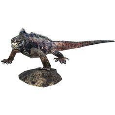 http://cp.c-ij.com/fr/contents/3157/marine-iguana/index.html