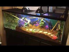 Chinese Water Dragon Terrarium Setup: one of my fav videos Water Dragon Pet, Chinese Water Dragon, Gecko Habitat, Turtle Habitat, Turtle Aquarium, Aquarium Fish Tank, Cute Reptiles, Reptiles And Amphibians, Lizard Cage