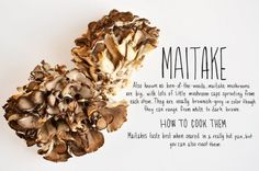 Maitake are a very popular mushroom in Japanese cuisine. They grow in large colonies and are sometimes referred to as the king of mushrooms.