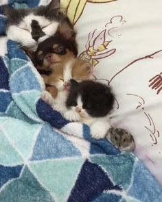 So much floof in one bed - more at megacutie.co.uk
