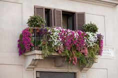 Rome - the balcony with flowers on Piazza Navona