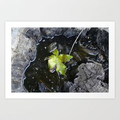Floating leaf Art Print by Cindy Munroe Photography - $15.60