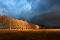 ***A row of trees and a rainbow. By Carl Smorenburg Desert Mountains, Kwazulu Natal, Cloud 9, Afrikaans, Africa Travel, Gaia, African Art, Wonderful Images, Continents