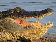 Title  Alligator's Mouth   Artist  Zulfiya Stromberg   Medium  Photograph - Photography