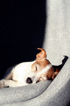 Top 10 Things Jack Russell Terriers Dont Like