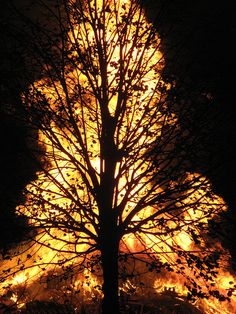 A Sunset Tree?  A Brightly Yellow Lighted Tree? Oh no!!!! Wait!! FOREST FIRE!!!!!!!!!!