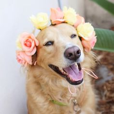 Because a wedfest is not complete without your favourite four legged baby. This dog looks dapper in a flowercrown!