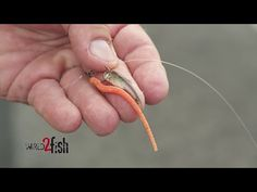 How to Drop Shot Deep Crappie and Bluegill - YouTube