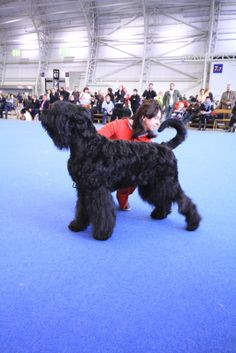 Black Russian Terrier, Terriers, Board, Dogs, Dog Haircuts, Terrier, Pet Dogs, Doggies, Planks