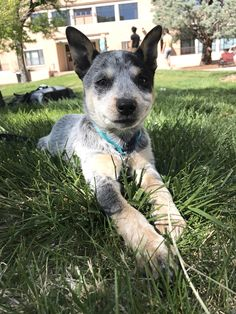 Meet Kaeda! She was the runt of the litter but she has a lot of spunk to make up for it. http://ift.tt/2pPX6za