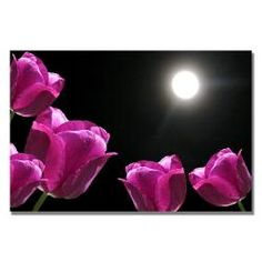 Kathie McCurdy 'Tulips in the Moonlight' Canvas Art