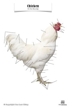 Male and female chickens have both a comb and wattle. The comb is ...