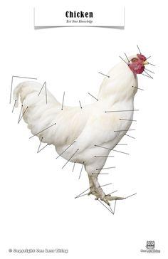 Chicken Anatomy, Poster
