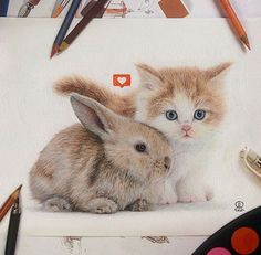 Incredible and adorable colored pencil drawing of a baby bunny and kitten! Copic Drawings, Pencil Drawings, Bunny Art, Color Pencil Art, Favim, Colorful Drawings, Animal Drawings, Drawing Animals, Drawing Art