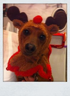 LUV THIS!!  Rudolph Doxie