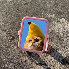 were kinda immature lol lady marmalade is the gatos Animals And Pets, Baby Animals, Funny Animals, Cute Animals, I Love Cats, Cool Cats, Cat Aesthetic, Animal Memes, Cat Memes