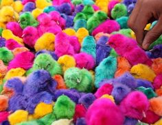 Colorful little baby Easter chicks:) THEY'RE PRECIOUS
