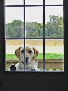 Please let me in!