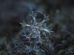 """This is one of most beautiful stellar dendrite snowflakes that i've captured winter 2012-13, but it was hard to process, because i had serious aligning problems (wind shifts and rotates this crystal, while i've took photo series). This is quite large snow crystal, 5-6 millimeters from tip to tip. I like this crystal's ornate """"design"""", and especially high detailed arms - they remind me six swords, pointing inward."""