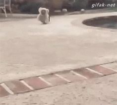 This one-dog stampede: