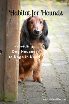 Habitat for Hounds is all about getting warm insulated dog houses to dogs in need. Or, pay a pittance and get detailed plans to build your own Warm Dog House, Insulated Dog House, Wildlife Protection, Cool Dog Houses, Homeless Dogs, Best Dog Training, How To Get Warm, Dog Care, Habitats
