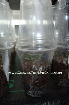 Here's a simple seed starting idea: Just find two plastic cups, one of which must be clear to allow light through. Fill the bottom cup with a seed starting mix and water.  Put your seeds in the cup and cover the seeds with an appropriate depth of soil then add a little bit more water. Cover with a clear cup and tape the sides. #Saturday6