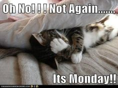 OH No It's Monday Again | Oh No! ! ! Not Again..... Its Monday!! - Cheezburger