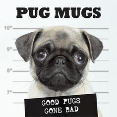 pug mug shot