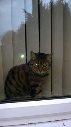 Katie in window