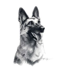 GERMAN SHEPHERD Dog Art Print Signed by Artist DJ Rogers by k9artgallery on Etsy https://www.etsy.com/listing/11424084/german-shepherd-dog-art-print-signed-by