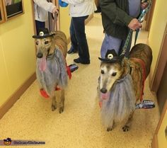 ZZ Top Dogs - 2014 Halloween Costume Contest via @costume_works