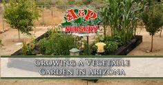 Growing a Vegetable Garden in Arizona