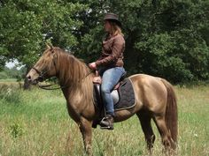 Sam's Dusty Shadow - Stallion Directory - Rocky Mountain Horse