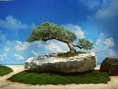 CARACTERÍSTICAS: 1- A árvore cresce sobre um platô de rocha onde ela se alimenta de uma área restrita de terra e substratos calcários. 2- A árvore deve ter seu contorno e sua estrutura seguindo as …