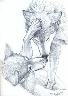 Cool pictures to draw - great facial images as a challenge - zeichnen - Art Sketches Amazing Drawings, Cool Drawings, Drawing Sketches, Amazing Art, Drawing Ideas, Sketching, Cool Pictures To Draw, Wolf Pictures, Wolf Sketch