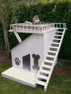 I want!!!!!! Hund - total relaxed, auf der Dachterrasse seines eigenen Bungalows. <3 <3 <3