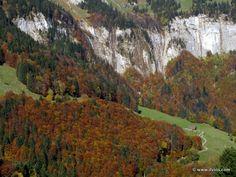 Forest in autumn mood - Titlis, Switzerland.