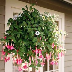 Great hanging baskets