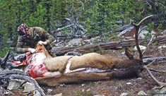 5 Techniques To Preserve Meat In The Wild You Should Practice - Bio Prepper