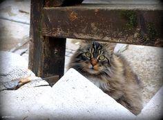 un des chats de l'ex-squero dei Muti